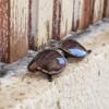 מיסטר וודיני - Apoidea - משקפי שמש מעץ