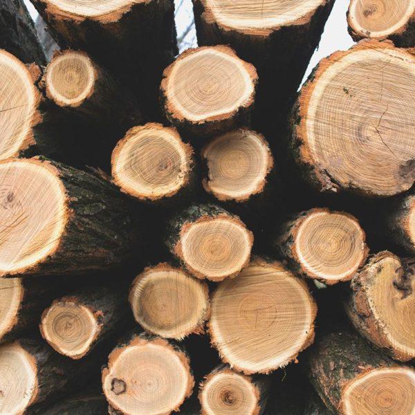 משקפי שמש מעץ